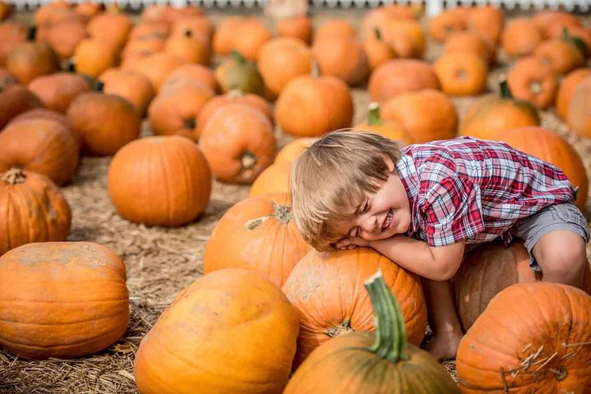 Boone Hall Plantation-top things to do in South Carolina in the fall