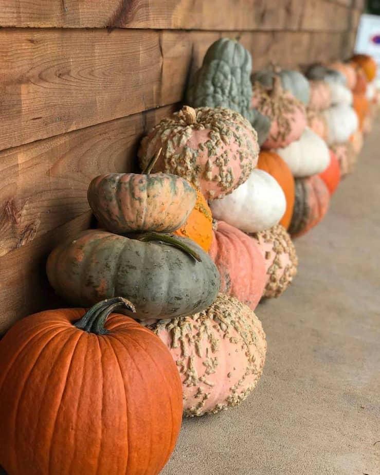 Bush n Vine Farm-top things to do in South Carolina in the fall