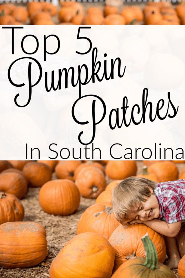 Pumpkin patches in South Carolina