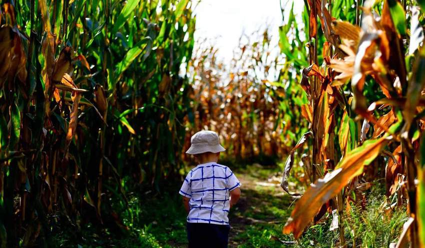 Corn Maze things to do in South Carolina in the fall