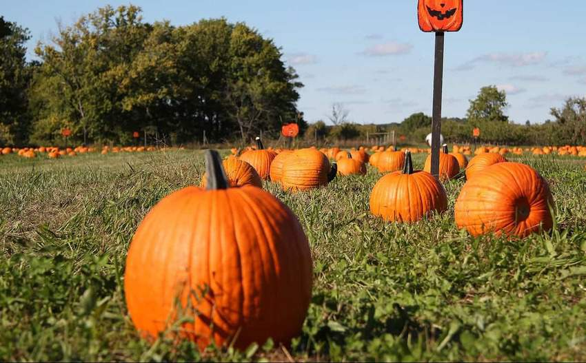 pumpkin patch, things to do in South Carolina in the fall