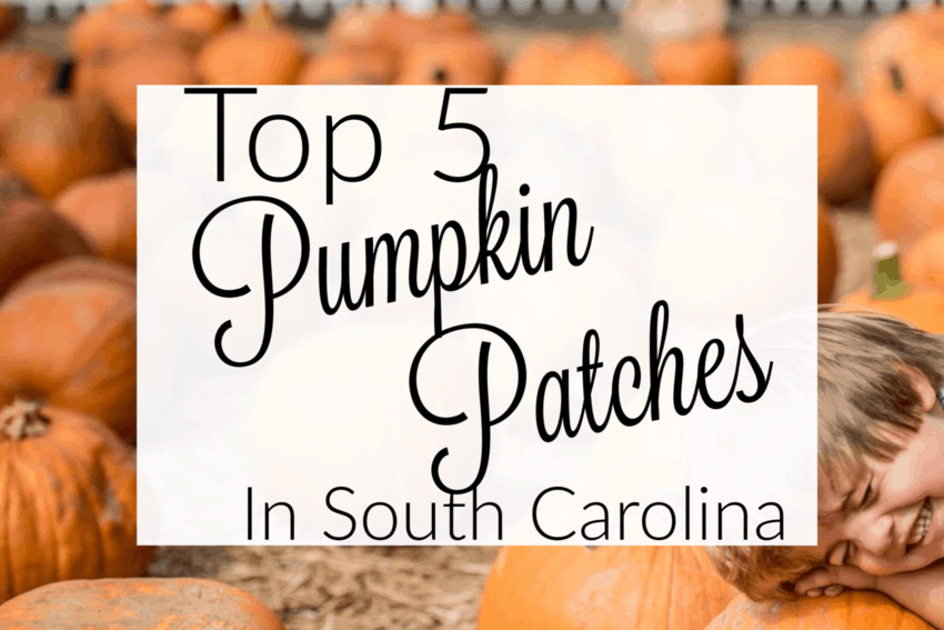 5 Fun Fall Activities in South Carolina