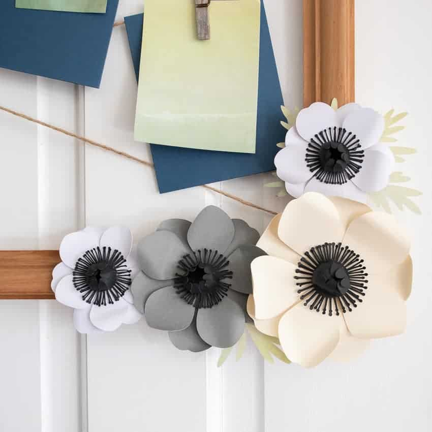 close up of paper anemone flowers